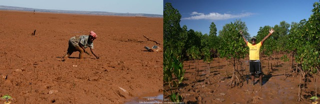 eden-projects-madagascar-island-mangrove-before-and-after-4-years